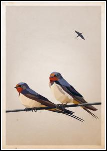 Swallows Juliste