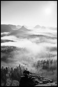 Foggy Forest Black & White I - 50x70 cm Juliste