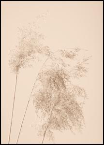 Reed Grass Juliste