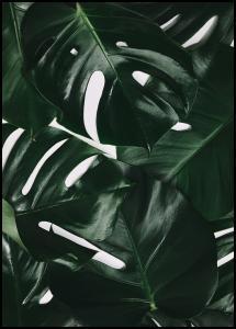 Monstera Plant I Juliste