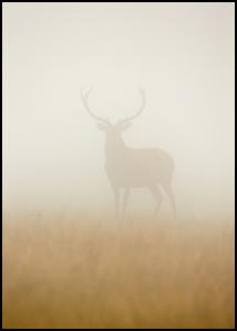 Ghost Stag Juliste