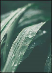 Waterdrop Juliste
