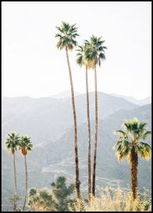 Palm Trees I Juliste
