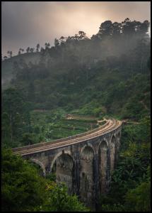 Jungle train rails Juliste