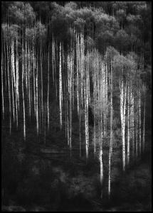 Forest Art Juliste