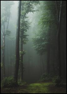 Mysterious forest Juliste