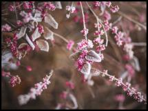 Kukka lähikuva Juliste