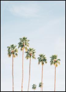 Palm Trees Juliste