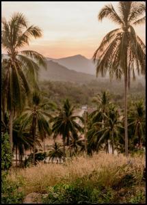 Palm Trees On Mountain Juliste