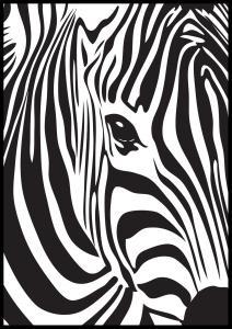 Zebra Juliste