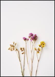 Dried flowers II Juliste