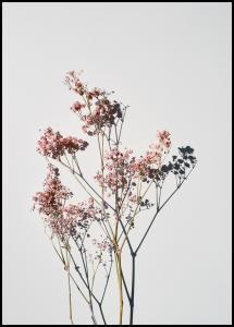 Dried flowers I Juliste
