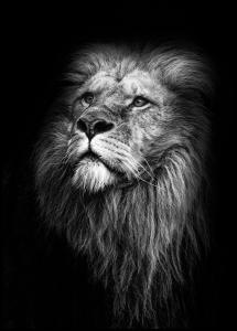 King Of Lions Juliste