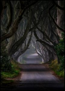 The Dark Hedges Magic road Juliste