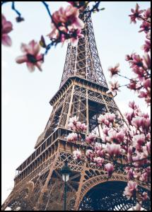 Eiffel Tower Blossoms Juliste