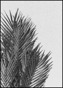 Palm Leaves Juliste