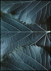 Blue Leaves Juliste