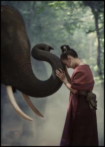 Respect the elephant Juliste