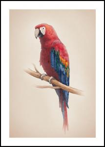 Tropical Parrot Juliste