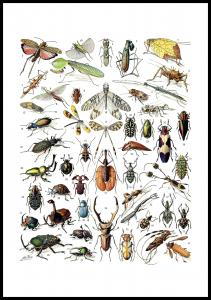 Hyönteiset II Juliste