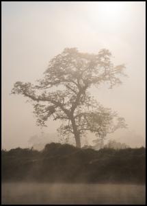 Misty Tree Juliste