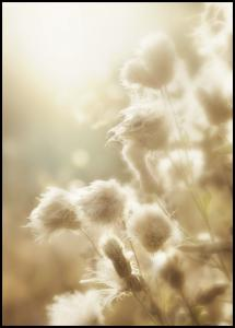 Fluffy flowers Juliste