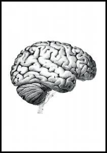 Aivot Juliste