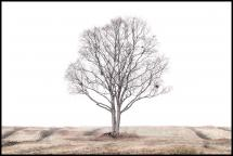 The lonely tree Juliste