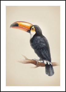 Tropical Toucan Juliste