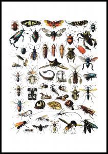 Hyönteiset I Juliste