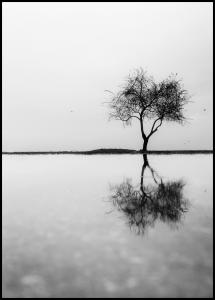 Lonely Tree Reflection Juliste