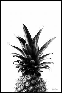 Pineapple B&W Juliste