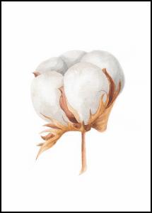 Cotton Flower Juliste