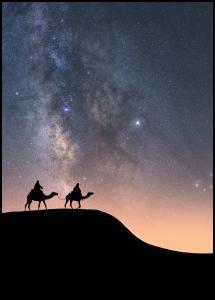 Camels Under The Stars Juliste