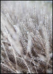 Frosty Grass Juliste