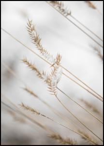 Swaying Reed I Juliste