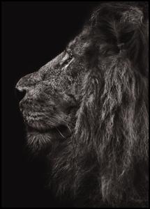 Lion In Profile Juliste