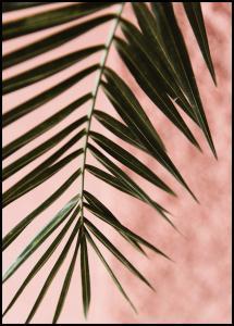 Pink pastell palm Juliste