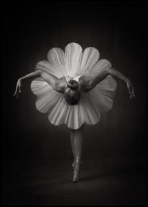 Floral Ballet Juliste