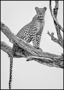 Leopard Portrait Juliste