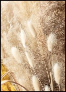 Dried Bouquet Juliste
