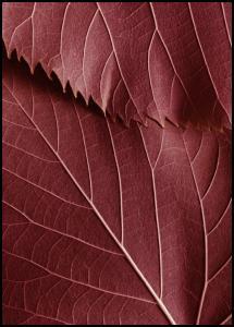 Red Leaves Juliste