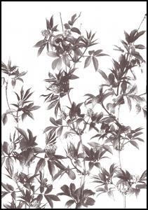Branches Juliste