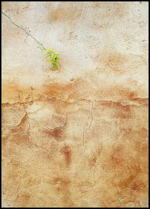 Cracked wall Juliste
