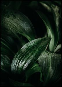 Plant Juliste