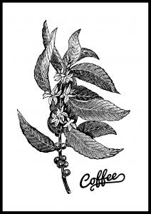 Coffee Botanical Juliste