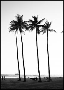 Black And White Palm Trees Juliste