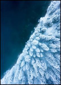 Frosty Forest Juliste