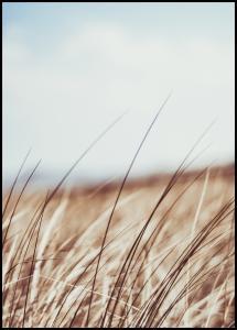 Dreamy Grass Juliste